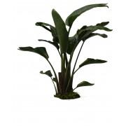 Medium - Indoor Plants - Garden Plants & Flowers - Garden Center ...