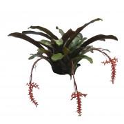"""Bromeliad- Aechmea Rocincie- 8"""""""